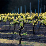 3 Things you need to know about the Hunter Valley today