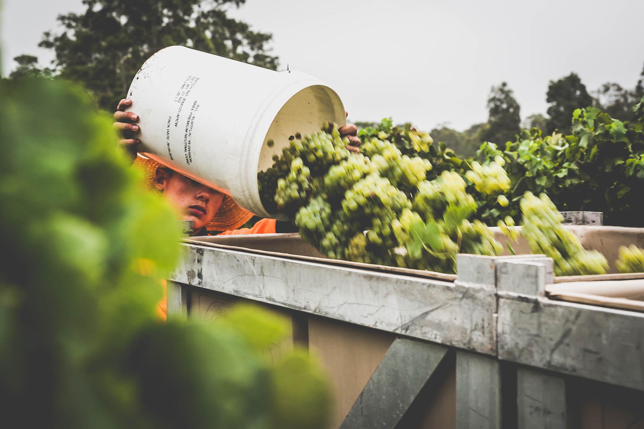 1st Release Wine Week 2019