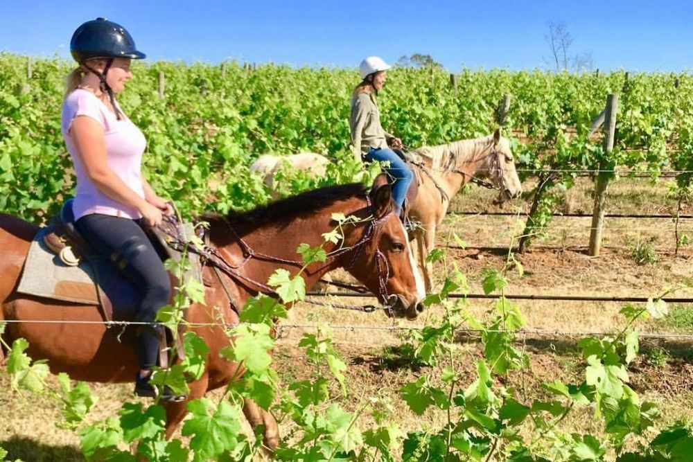 HORSE RIDING IN THE VINES